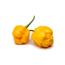 7 Pot Brainstrain Yellow Pepper Seeds