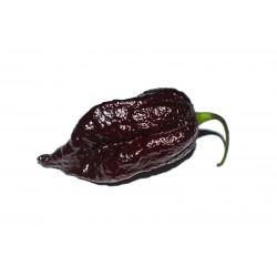 7 Pot Douglah Pepper Seeds