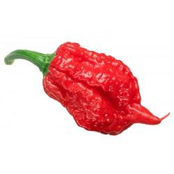 Carolina Reaper Original Red Pepper Seeds