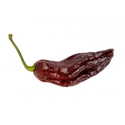 Bhut Jolokia Chocolate Pepper Seeds