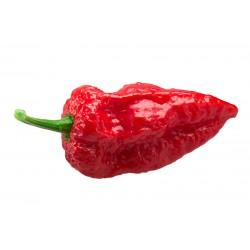 Bhut Jolokia Red Pepper Seeds