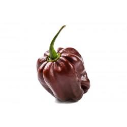 Habanero Chocolate Pepper Seeds