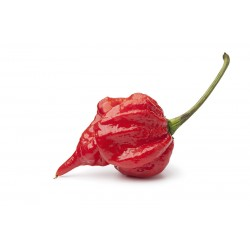 Scorpion Trinidad Red Pepper Seeds